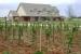 vineyard_006